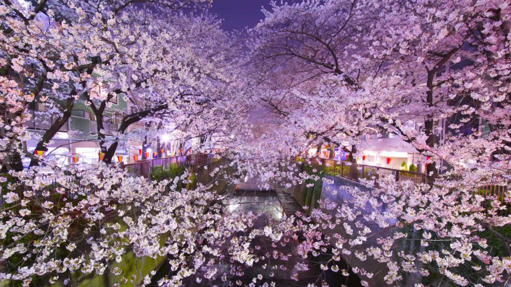 Japan tokyo, Japan culture, Japan guide, Japanese flag, Japan rail pass, Osaka Japan, Japan visa requirements, Japan map, Japan travel